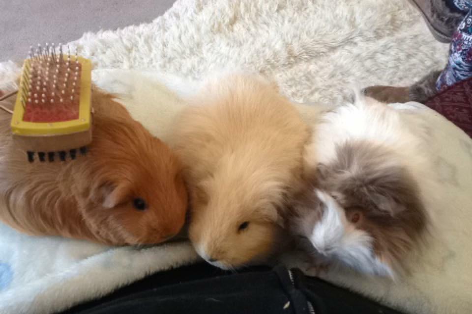 grooming3girls